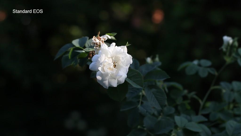 Flower_standard